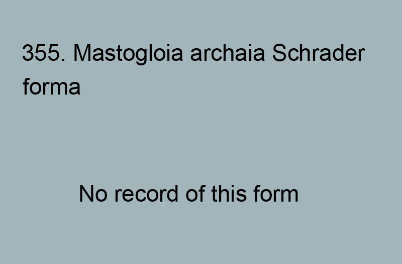 355. Mastogloia archaia forma