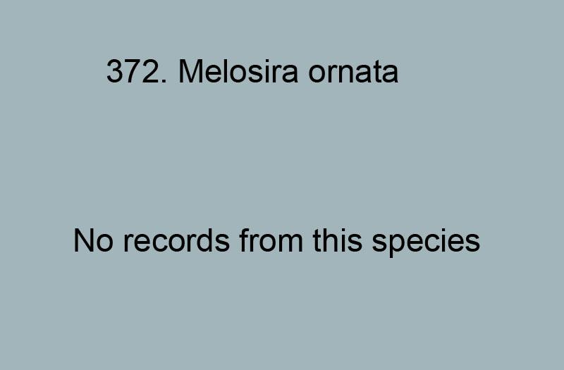 372. Melosira ornata