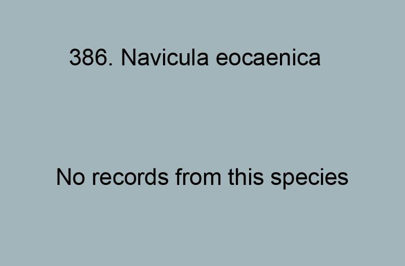 386. Navicula eocaenica