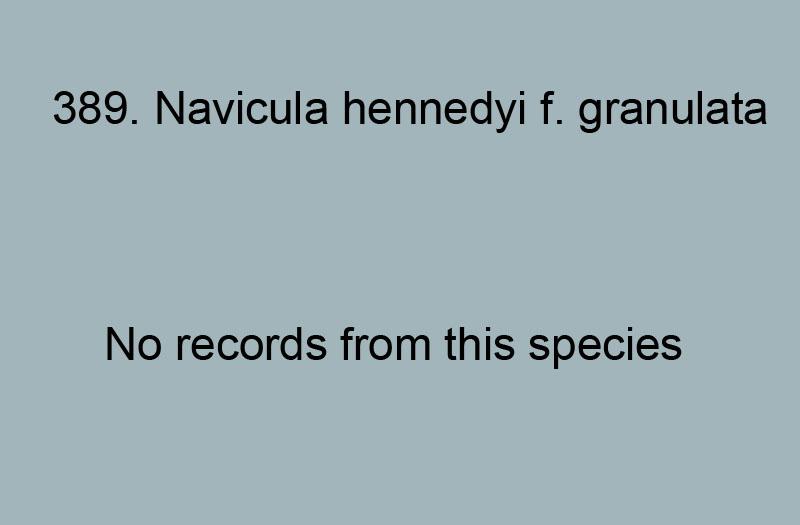 389. Navicula hennedyi f. granulata