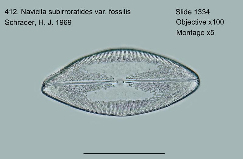 412. Navicula subirroratoides
