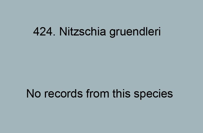 422. Nitzschia groveana