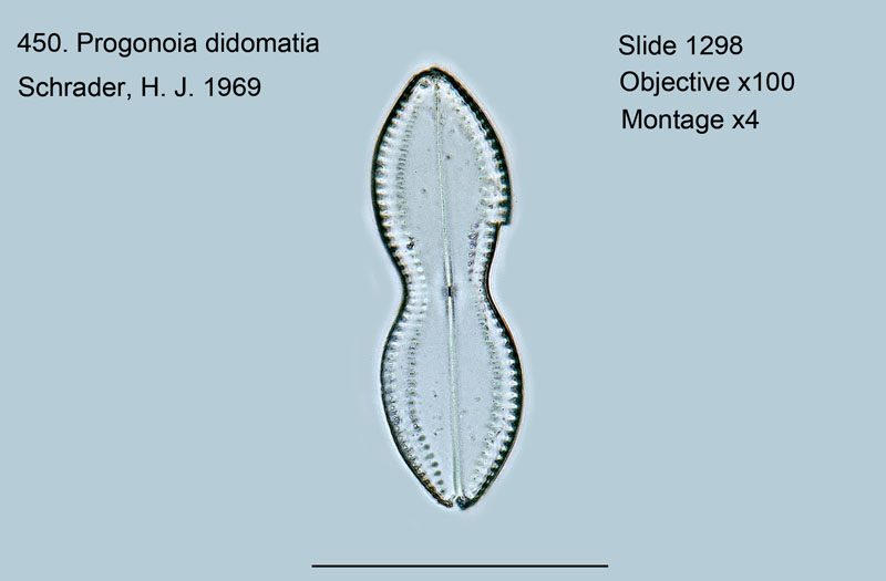 450. Progonia didomata