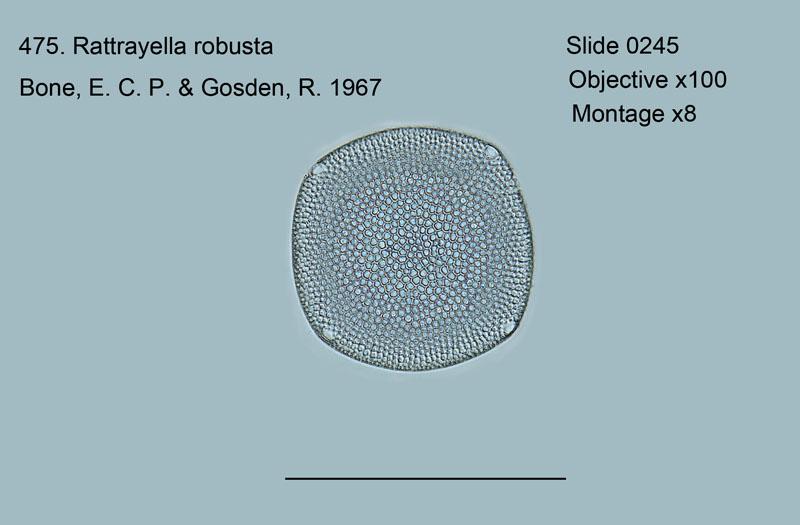 475. Rattrayella robusta