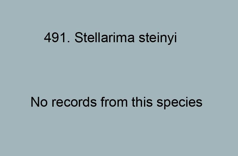491. Stellarima steinyi