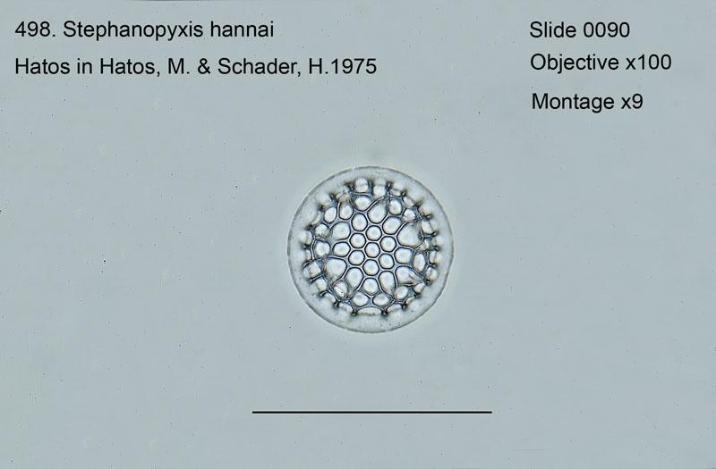 498. Stephanopyxis hannai