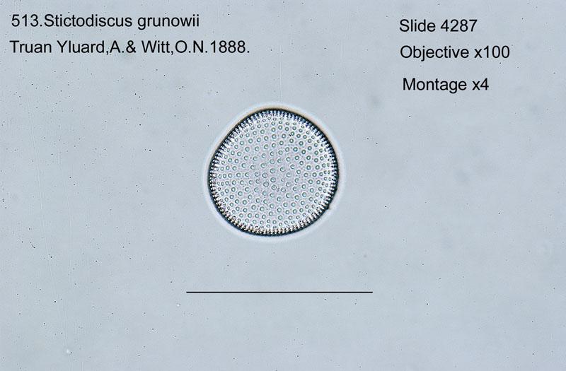 513. Stictodiscus grunowii