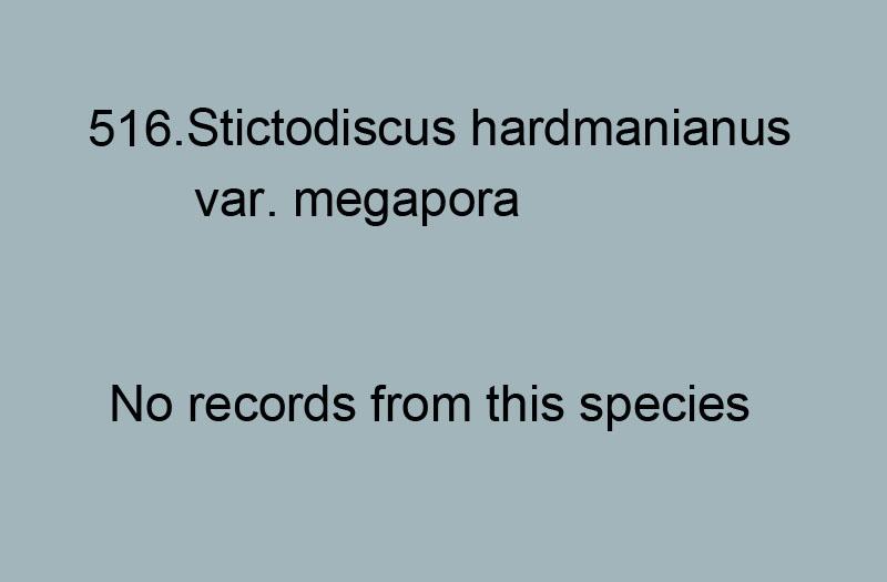 516. Stictodiscus hardmanianus var. megapora