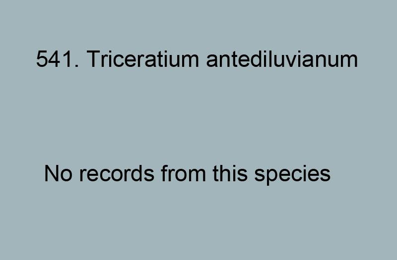 541. Triceratium antediluvianum