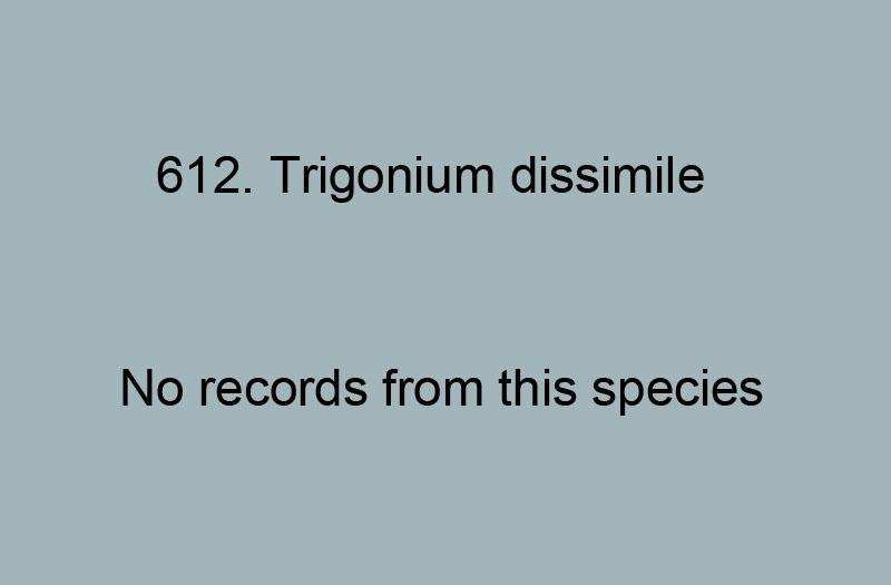 612. Trigonium dissimile