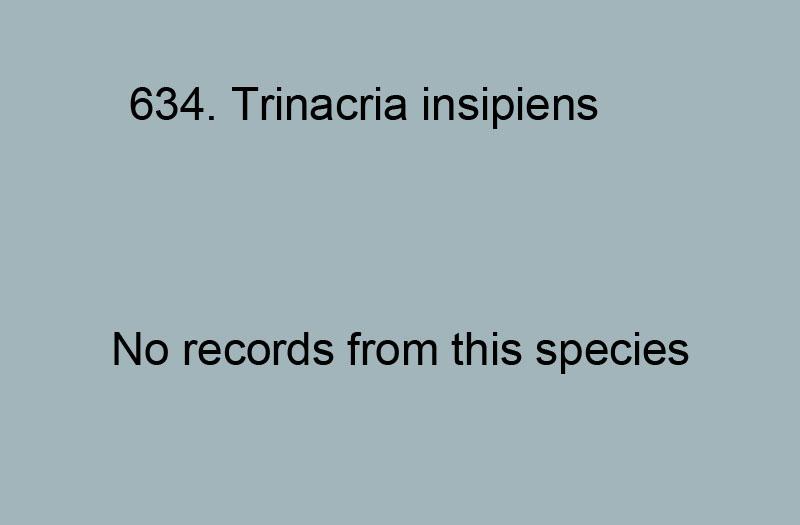 635. Trinacria incipiens