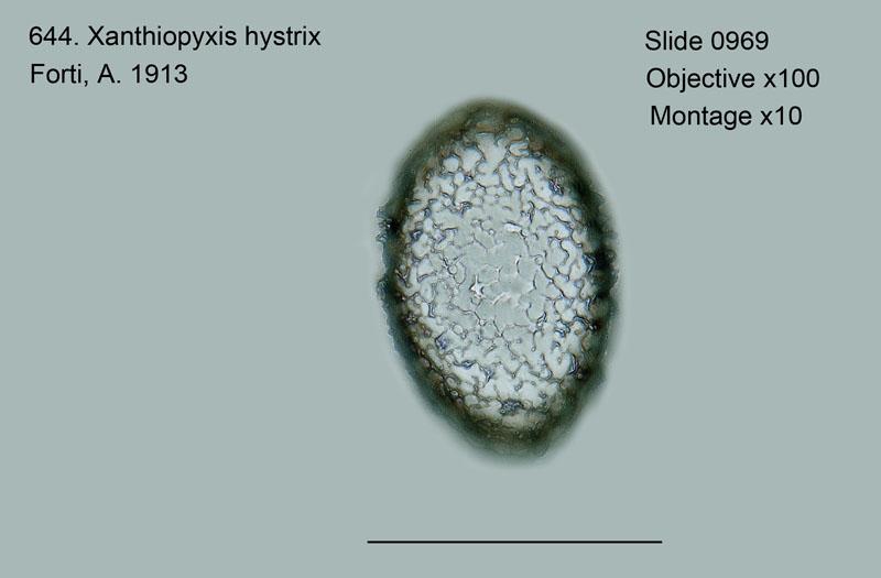 644. Xanthiopyxis hystrix