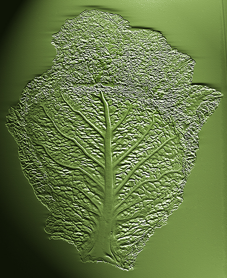 Embossed cabbage leaf