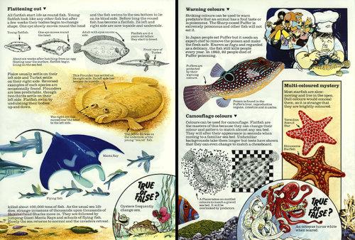 Flatfish - Usborne Publishing