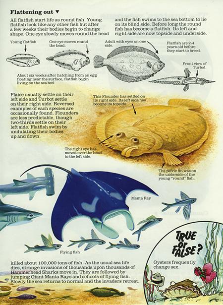 Flatfish 1 - Usborne Publishing
