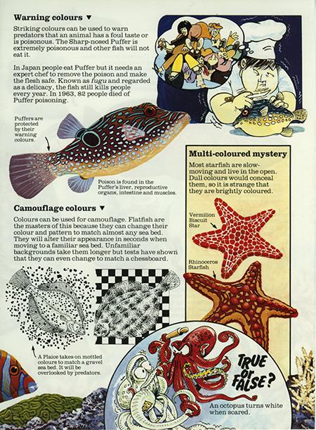 Flatfish 2 - Usborne Publishing