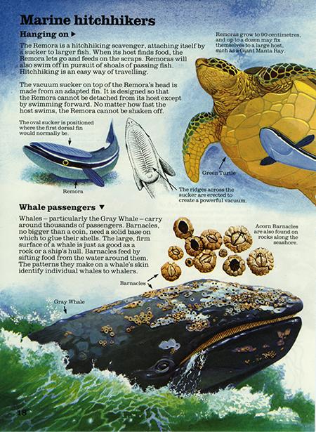 Ramora fish 1 - Usborne Publishing