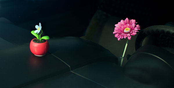 Two Flowers on a Beetle Dashboard