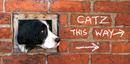Catz this way