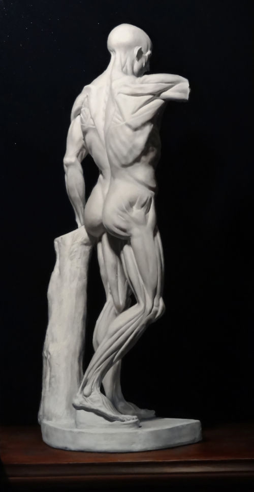 Ecorche (after Houdon)