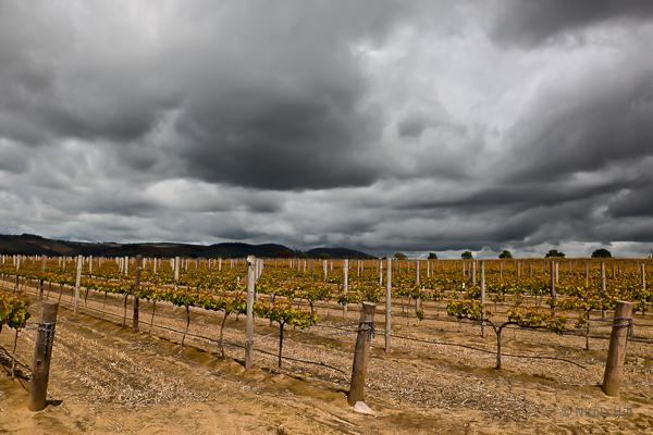 Hunter Valley Winery, Australia