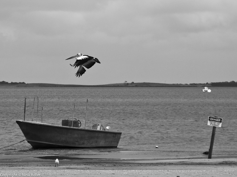 Boat and Pelican