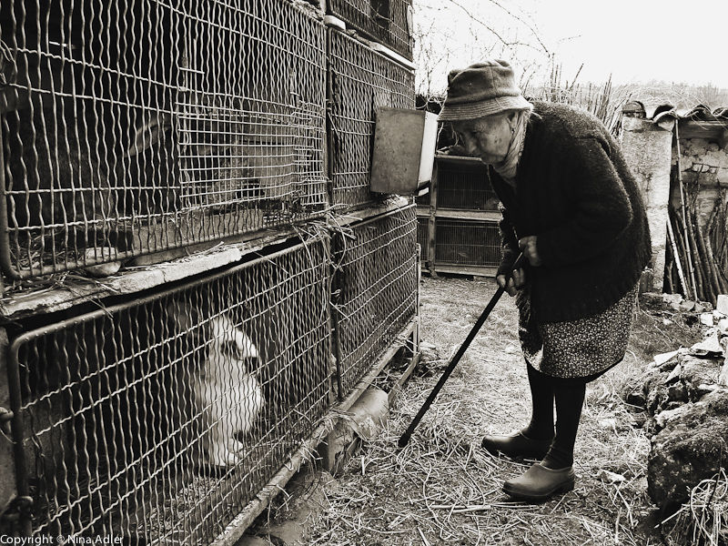 Madame B and her rabbits