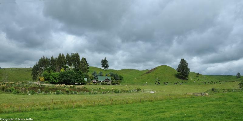Countryside North Island
