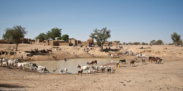 Village water hole
