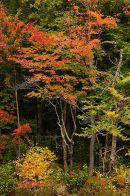 Autumn Colours, New Hampshire