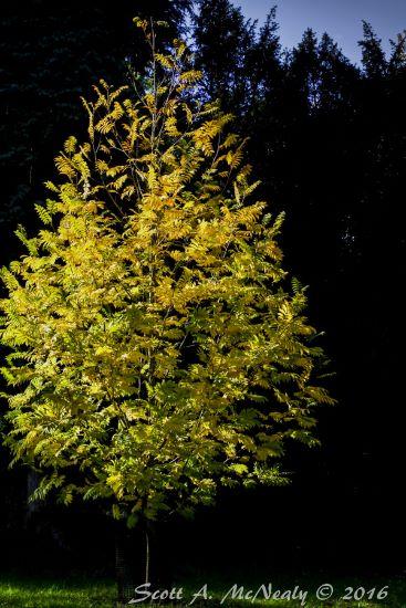 Autumn Colour at Westonbirt National Arboretum
