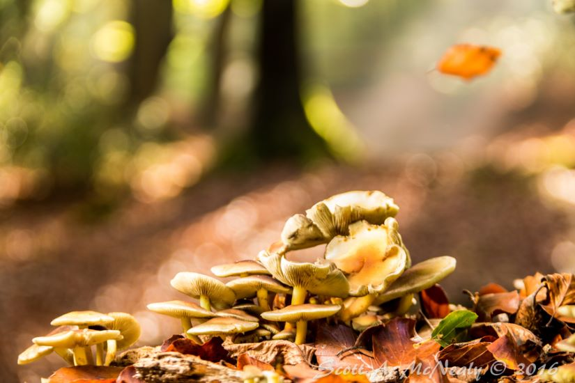 Fungus and rays of light on Halloween at Burnham Beeches 2016