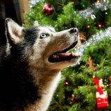 Maya with tree at Christmas 2015-0026