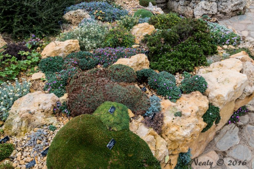 RHS Wisley-Alpine House-Display