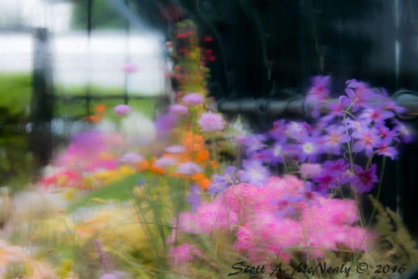RHS Wisley-Alpine House flowers looking through rain