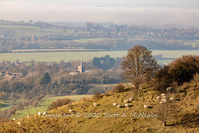 Steps Hill near Ivinghoe Beacon with sheep overlooking Pitstone Village