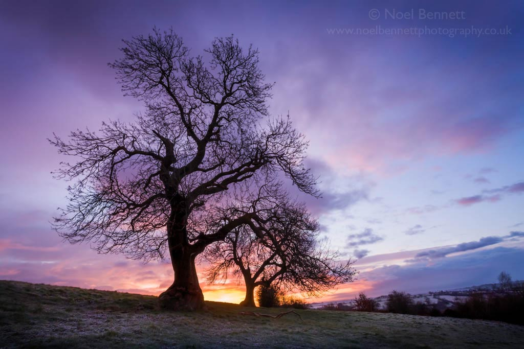 Dawn Over Oulton Heath