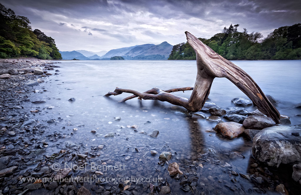 Driftwood On Derwent Water