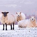 Warm Winter Woolies
