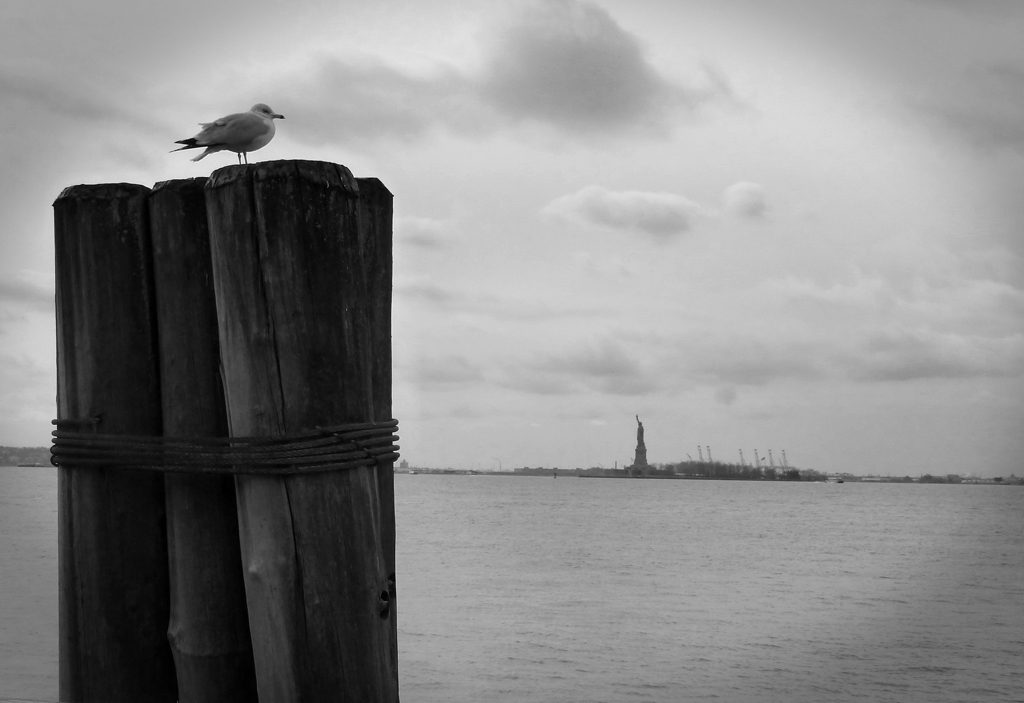 Seagull and Statue of Liberty 4