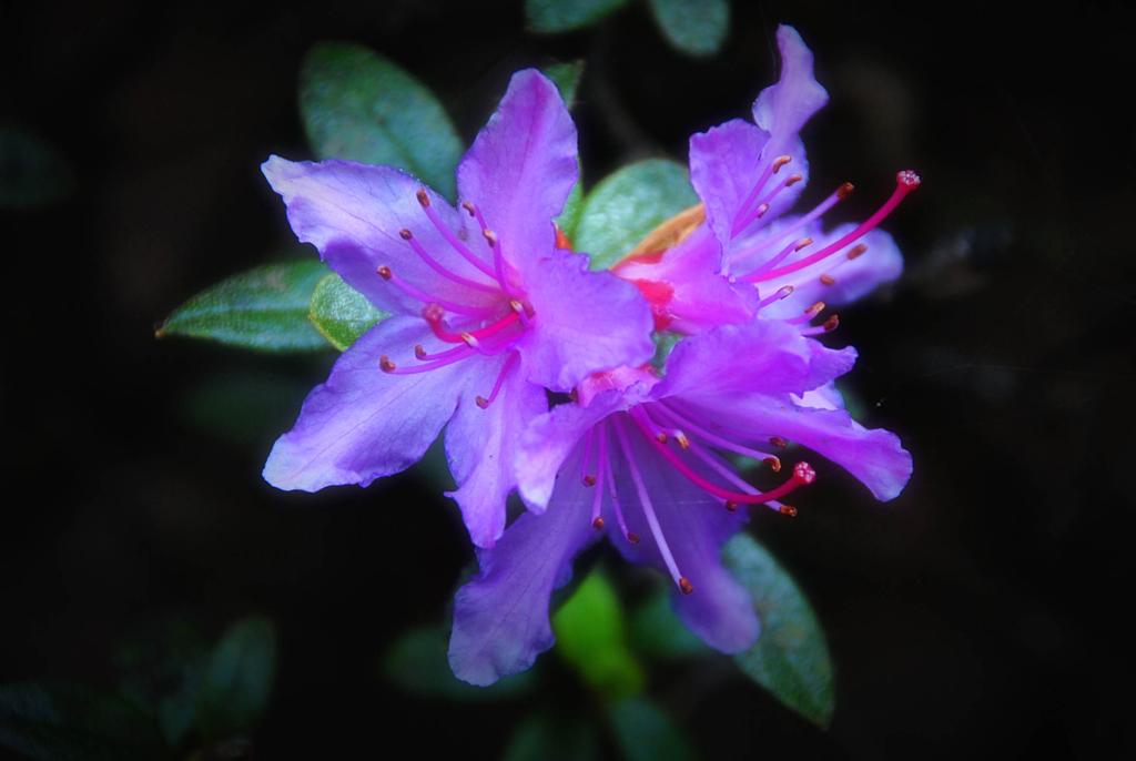 Tatton Flower 1