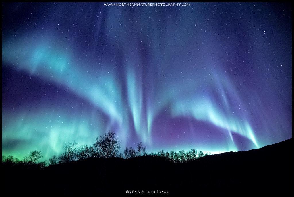 Aurora #1