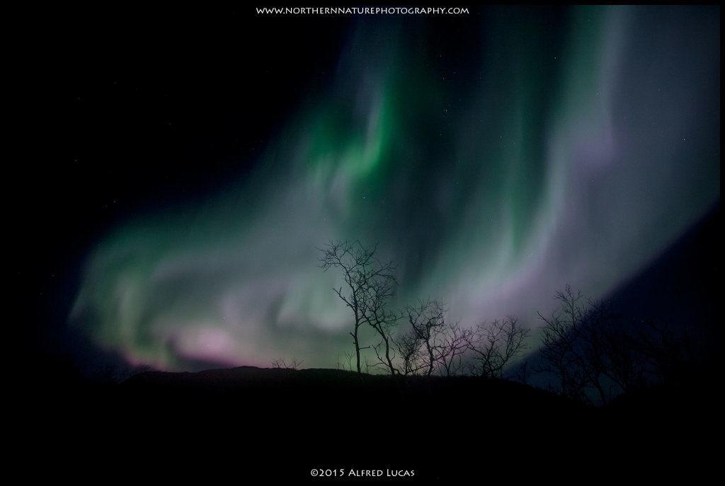 Aurora #8