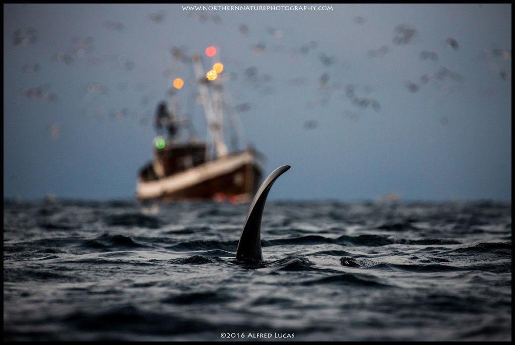 Orca #2