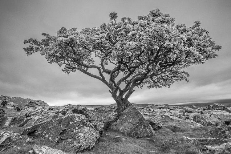 ERATIC TREE