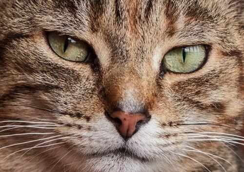 Tiger's Eyes