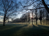 Dawn Mist MArbury Park