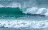 SEA BIRDS SKIMMING THE WAVES