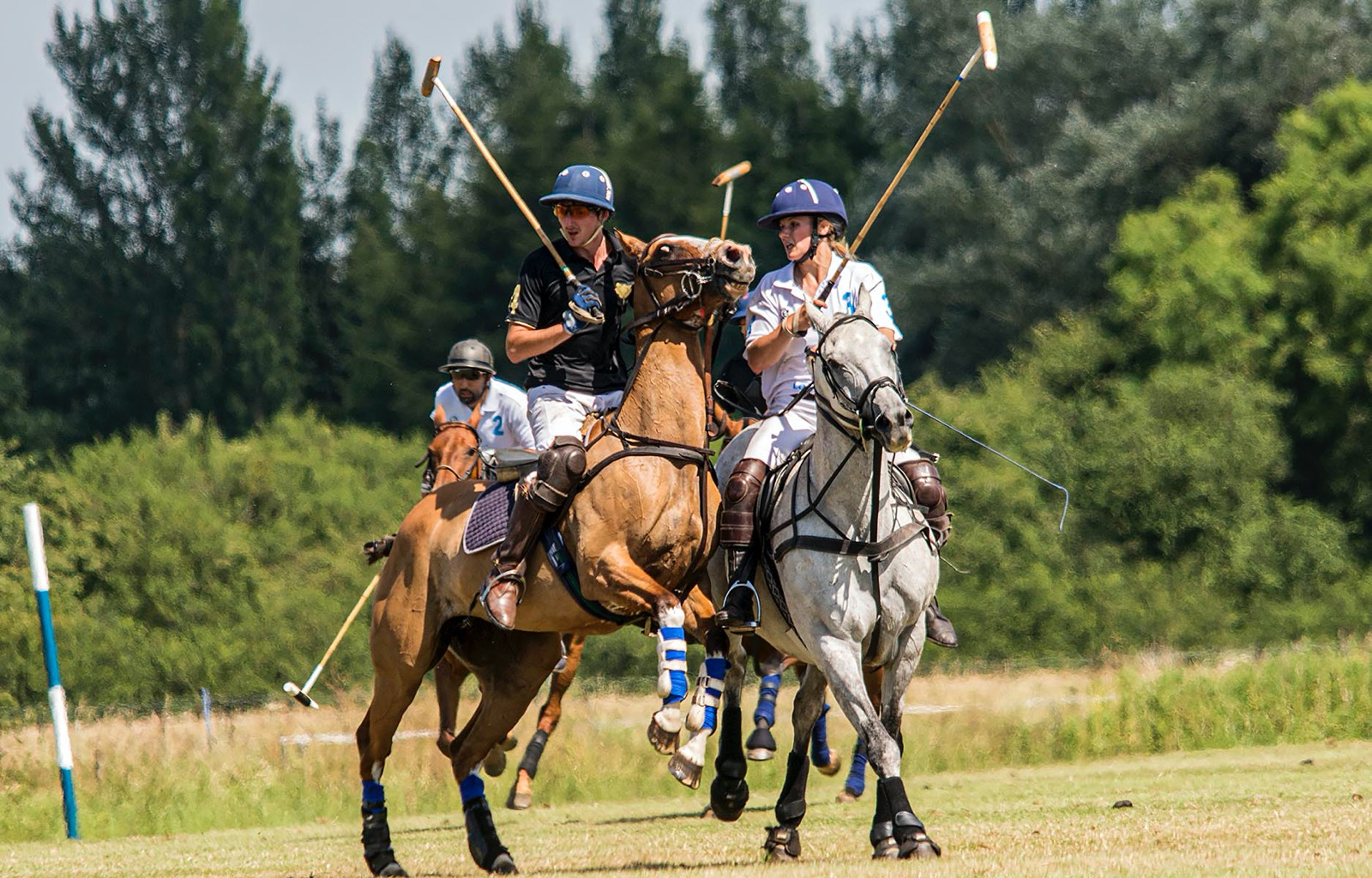 Fast pace of Polo horse sport