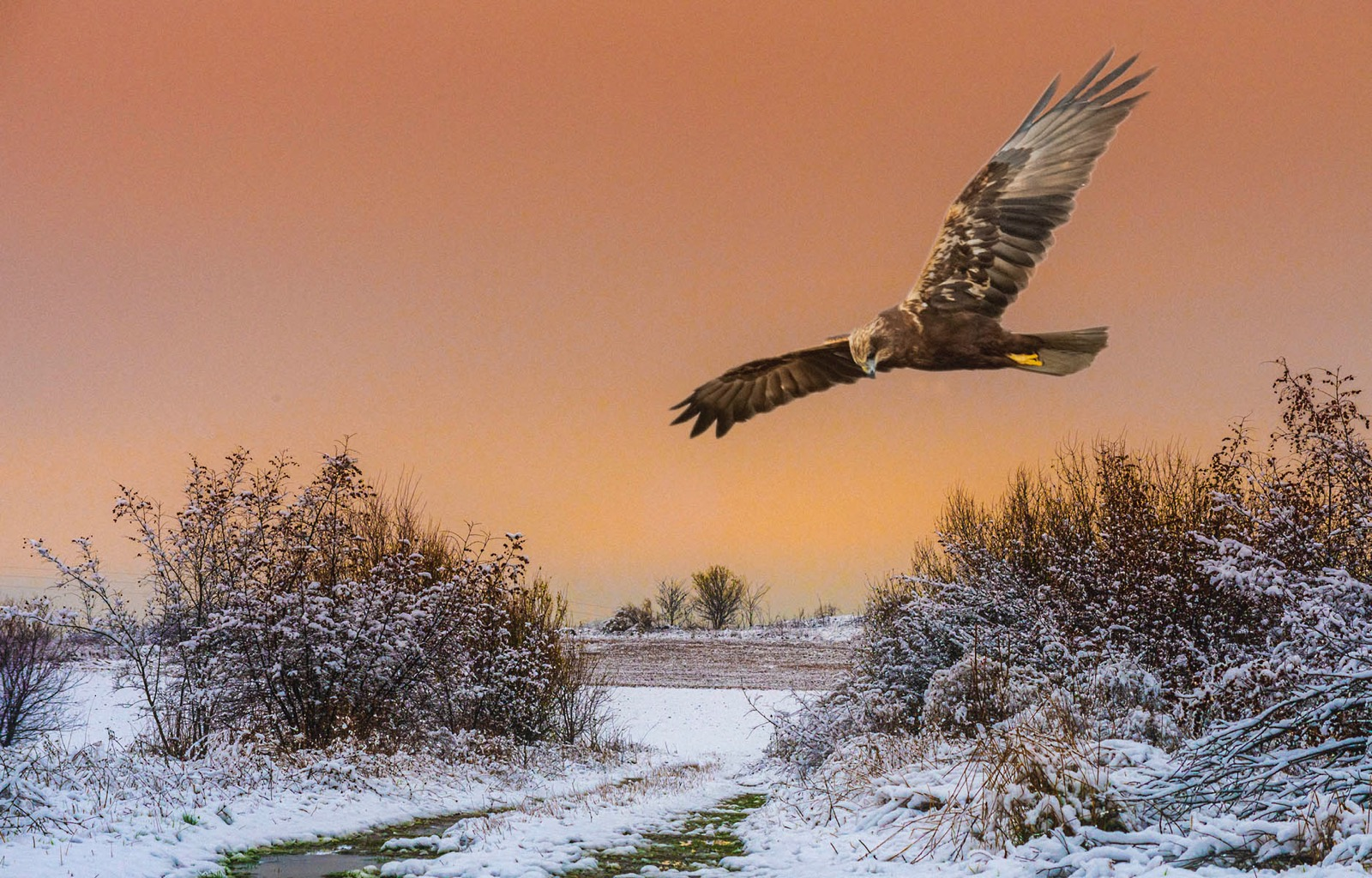 Sunset hunter snow covered fields